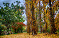 Autumn in bright  HDR   2